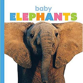 Baby olifanten (starters)
