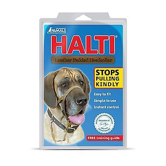 HALTI Hund Halfter gepolstert schwarz Größe 4, Extra groß