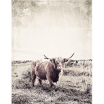 Vintage Highland Cattle Poster Print par SD Graphics Studio