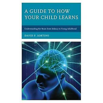Een gids voor hoe uw kind leert - inzicht in de hersenen van Infanc