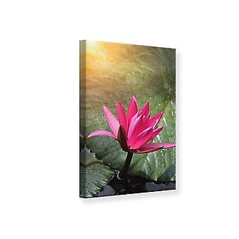 Canvas afdrukken Lily In glinsterende Morning Dew