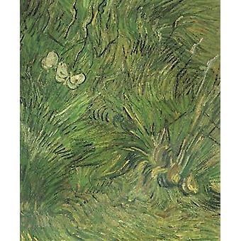 Two White Butterflies, Vincent Van Gogh, 55 x 44.5 cm