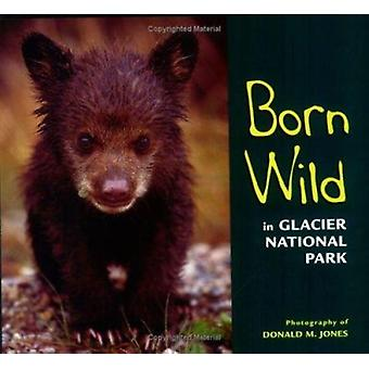 Born Wild in Glacier National Park by Jones - Donald M Jones - Donald
