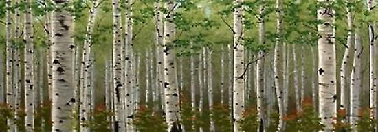 Summer Birch Forest Poster Print by Julie Peterson