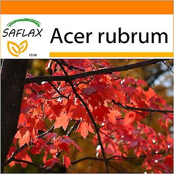 Saflax - Garden in the Bag - 20 seeds - Red Maple - Erable rouge - Acero rosso  - Arce rojo - Rotahorn