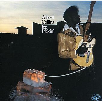Albert Collins - importación de Estados Unidos Ice Pickin' [CD]