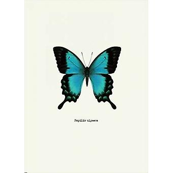 Blue Butterfly Poster Print by GraphINC