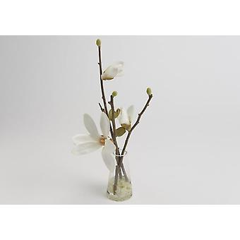 Amadeus Magnolia Eau Campbellii 16 cm (Home , Decoration , Flowers)