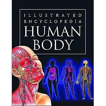 Människokroppen (illustrerad encyklopedi)