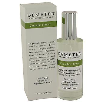 Demeter Women Demeter Cannibis Flower Cologne Spray By Demeter