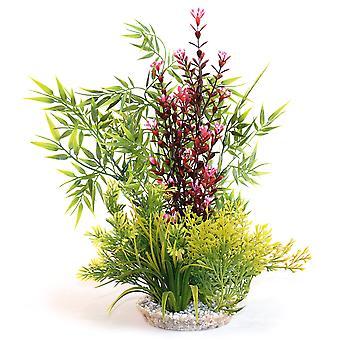 Sydeco naturliga växter Calypso jätte 39cm (4-Pack)
