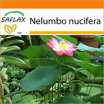 Saflax - Garden in the Bag - 8 seeds - Sacred Indian Lotus - Lotus sacré - Fior di loto asiatico - Lloto sagrado - Indische Lotusblume