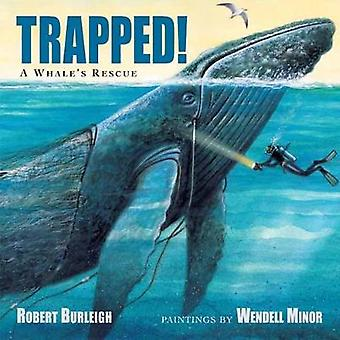 Trapped! - A Whale's Rescue by Robert Burleigh - 9781580895590 Book