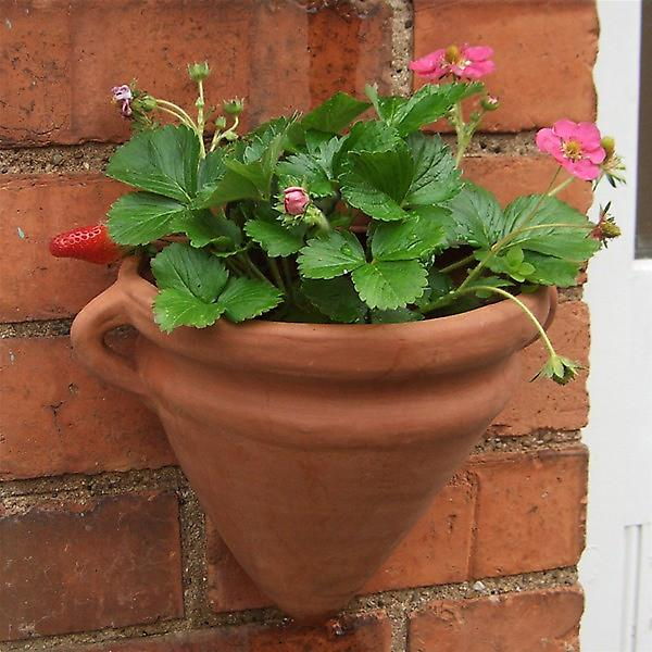 Terracotta Planters - Amphoran Style Wall Pots