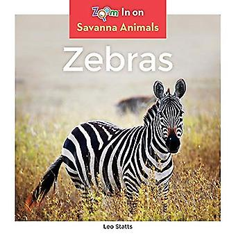 Zebras (Savanna Animals)