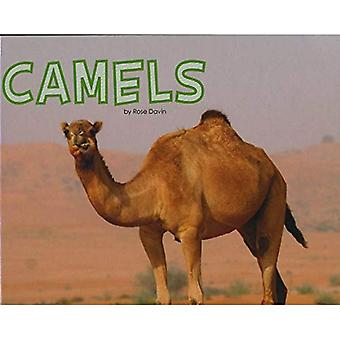 Camels (Pebble Plus: Meet Desert Animals)