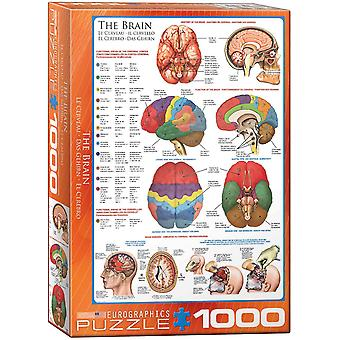 The Brain 1000 piece jigsaw puzzle 680mm x 490mm  (pz)