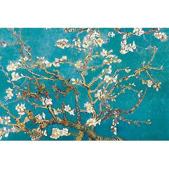 Filiais de amêndoa em 1890 Bloom Poster Print por Vincent van Gogh (36 x 24)