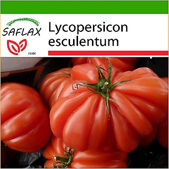 Saflax - 10 seeds - With soil - Tomato - Costoluto Genovese - Tomate Costoluto Genovese - Pomodoro Costoluto Genovese - Tomate - Costoluto Genovese - Tomate - Costoluto Genovese