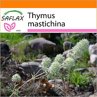 Saflax - Garden in the Bag - 250 seeds - Mastic Thyme - Thym résineux - Timo mastichina - Tomillo blanco - Spanischer Majoran