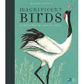 Magnificent Birds (Walker Studio)