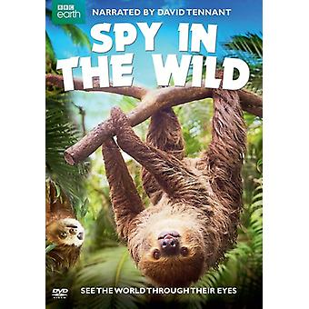 Spy in the Wild [DVD] USA import