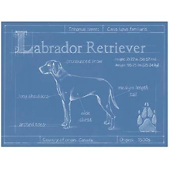 Blueprint Labrador Retriever Poster Print by Ethan Harper (16 x 12)