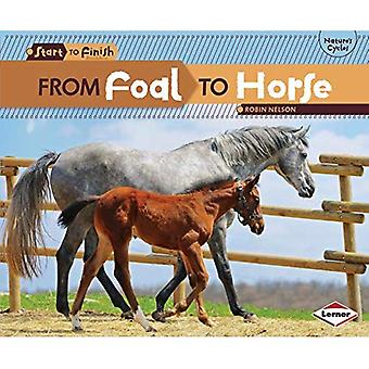 Från föl till häst (Start till Finish, sekund)