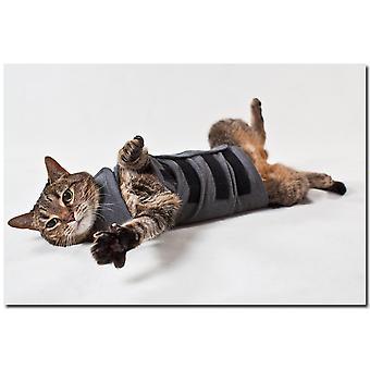 Thundershirt For katte Heather grå Medium