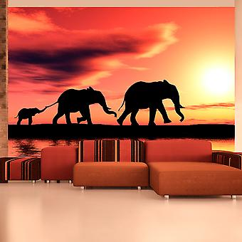 Wallpaper - elefantes: familia