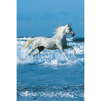 Horse Sea - Bob Langrish Poster Poster Print