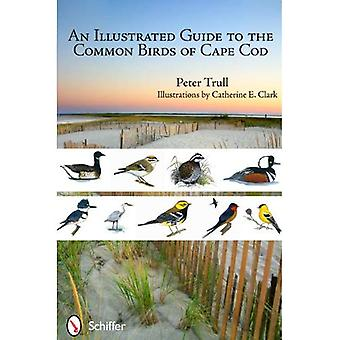 Ein illustrierter Führer zu den gemeinsamen Vögel von Cape Cod