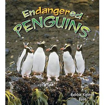 Pingouins en voie de disparition (animaux en voie de disparition de la terre)