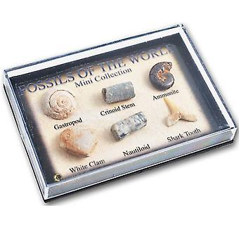 ミニ展示ケースの化石