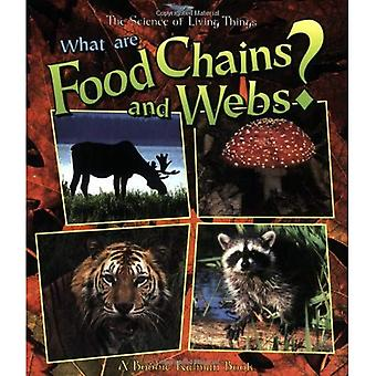 What are Food Chains and Webs? (Science of Living Things)