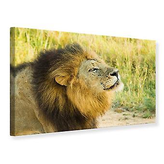 Leinwand drucken ist der König der Tiere