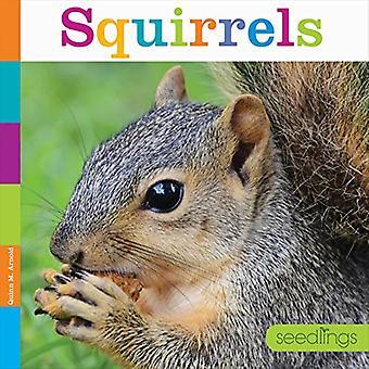 Eekhoorns (zaailingen: achtertuin dieren)