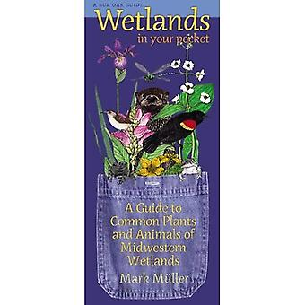 Wetlands in Your Pocket: A Guide to Common Plants and Animals of Midwestern Wetlands