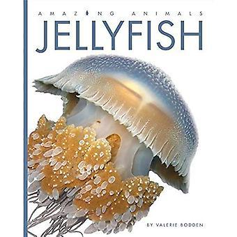 Jellyfish (Amazing Animals)