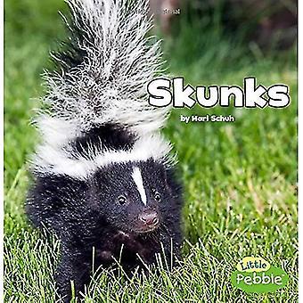 Skunkar (svart och vitt djur)