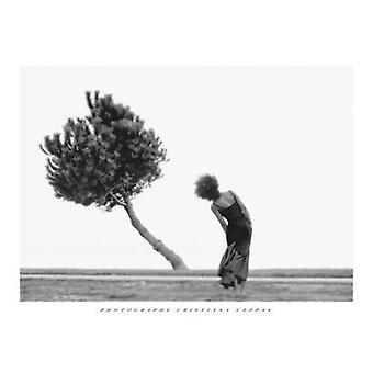 A árvore Poster Print by Christiana Ceppas (31 X 23)