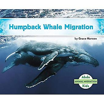 Humpback Whale Migration (Animal Migration)