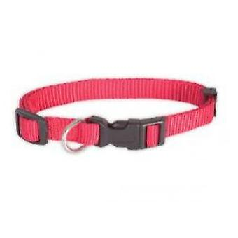 Chadog Nylon Collar  basic  10mm x 20 / 35Cm (Dogs , Walking Accessories , Collars)