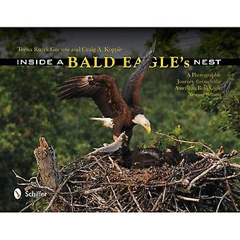 Inde i en Bald Eagle's Nest