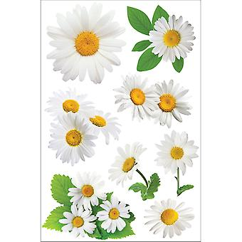 Autocollant 3D 4,5 '' X 7 '' feuille Oxeye Daisy Stdm0119