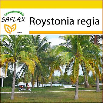 Saflax - Potting Set - 8 seeds - Cuban Royal Palm - Palmier royal de Cuba - Palma reale cubana - Palmera real cubana - Cubanische Königspalme