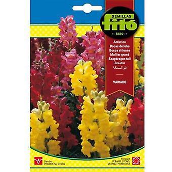 Семильяс Fitó Antirrhine зайчики разнообразны (Сад, Садоводство, семена)
