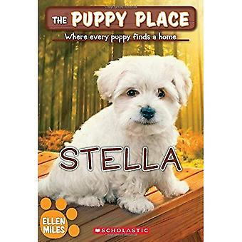 Stella (Welpe Platz)