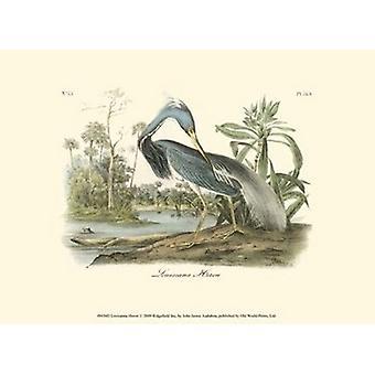 Louisiana Heron affisch Skriv av John James Audubon (13 x 10)