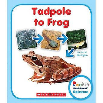 Tadpole till groda (Rookie läsa-om vetenskap)